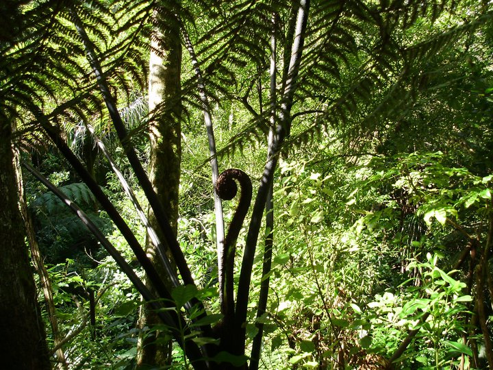 Te Kotahitanga and Polygogy