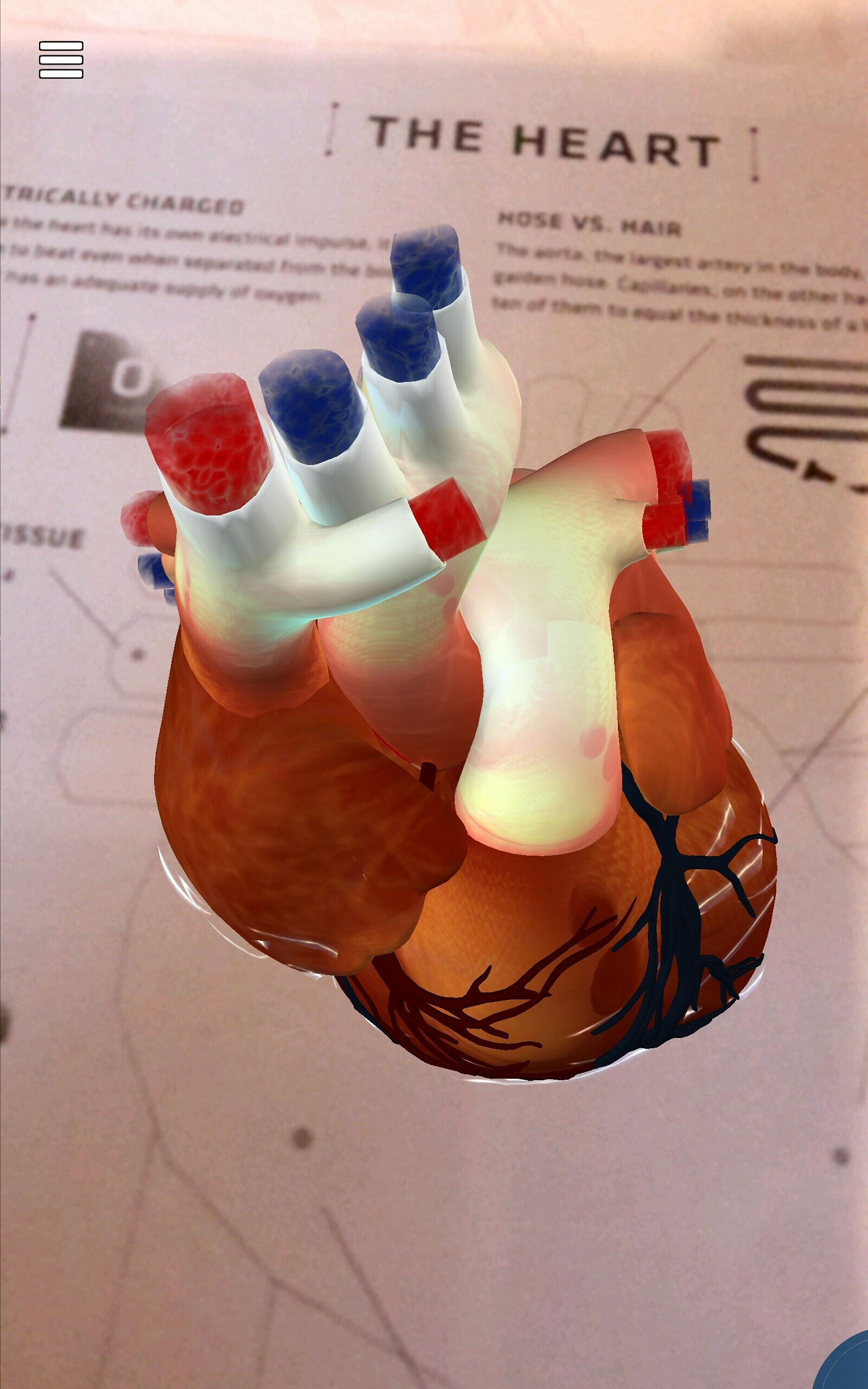 Augmented Reality allows students to study heart circulation and structure in 3D view.